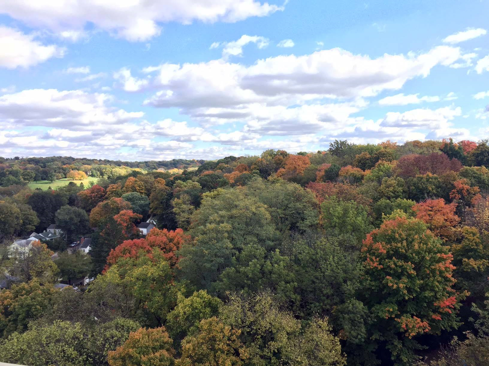 Country Club Fall View